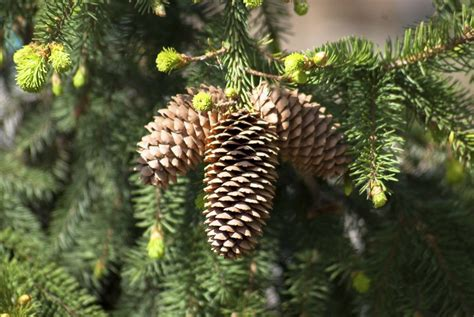 cone tree adorable diy pine cone decorations you can easily do yourself