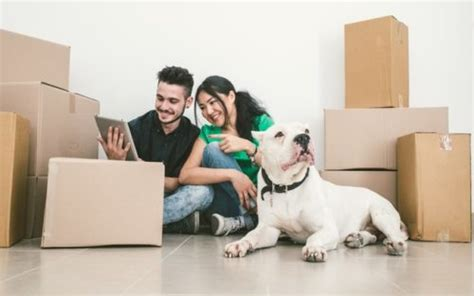 moving to a new house with a dog moving house with a dog 9 tips to help your canine companion cope