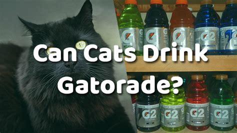 can dogs drink gatorade can cats drink gatorade pet consider