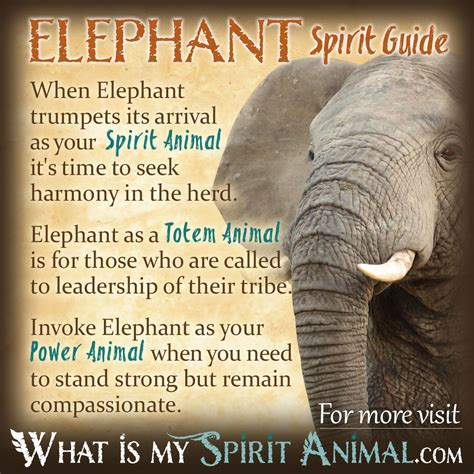 symbolizes meaning elephant symbolism meaning spirit totem power animal