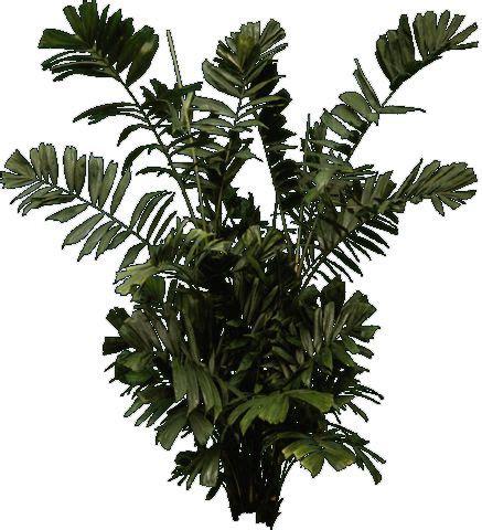 templates tree photoshop 142 best images about vegetation cutout on pinterest 3d