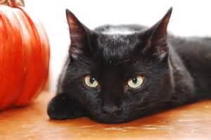 halloween black cats juniper s animal jam grove spooky radio candy bowl