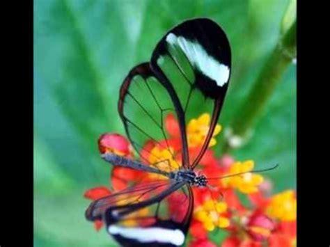 immagini fiori stupendi fiori meravigliosi