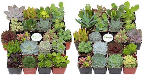 Amazon Succulents | amazon twenty unique succulents only 31 99 today only
