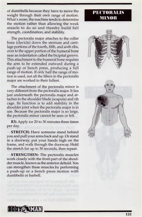 chest muscles pectoralis major  minor