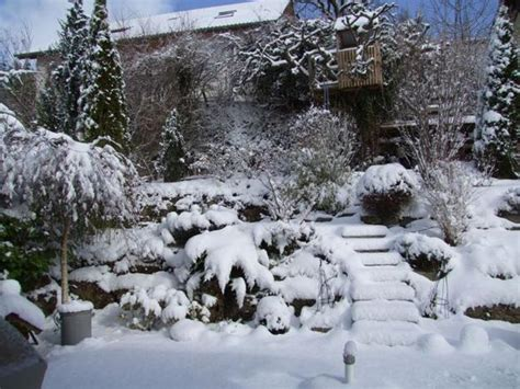 beautiful winter gardens  snow capped plants