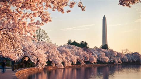 cherry blossom festival dc west end this spring park hyatt washington d c