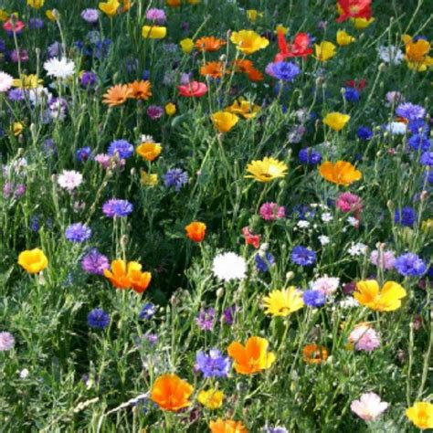 Images Of Flowers In The Garden Multi Coloured Flower Seeds From Ruddick Garden Gifts