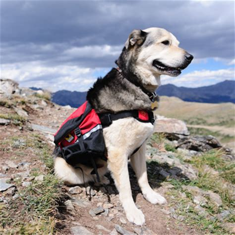 packs and dogs backpack by mountainsmith