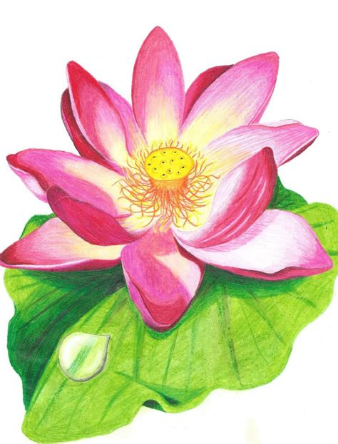 lotus flower colors lotus flower with crayons coloring designs