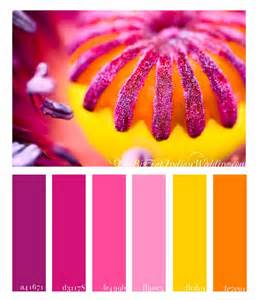 poppy color poppy pink color palette monday
