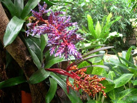 a plant in the tropical rainforest types of plants in the rainforest medicinal herbs plants
