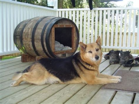 craigslist dog house cool dog house dogs dogs n stuff pinterest