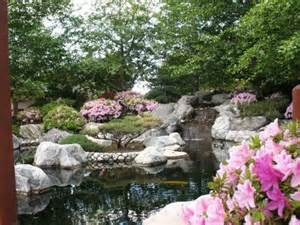 tranquility blooms at the japanese friendship garden