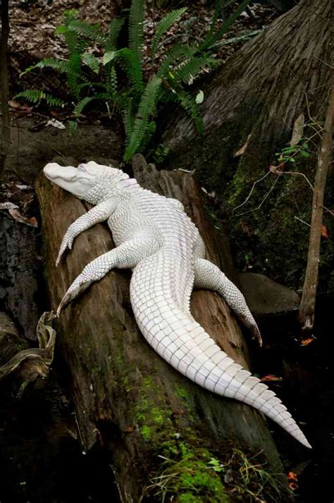 rare albino animals  dont  colors   cool