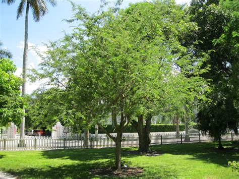 best shade tree for backyard shade tree tropical florida gardens