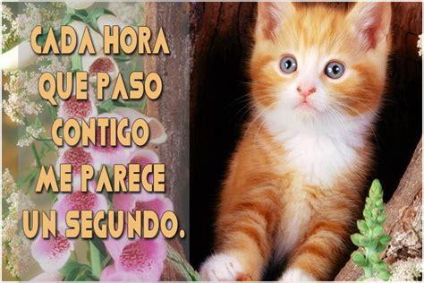 imagenes lindas de amor de gatitos bonitas frases de amor con gatitos en imagenes