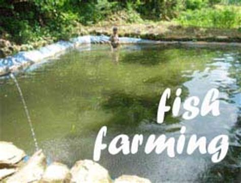 sle business plan on fish farming ideas for business how to start a profitable fish farming