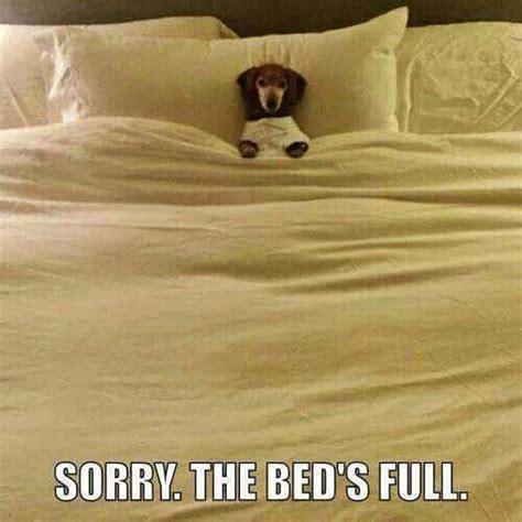 dog in bed meme sorry dog humor