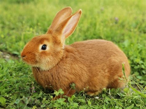 imagenes animales que saltan so 241 ar con un conejo