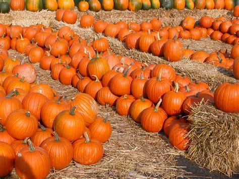 the pumpkin unit studies
