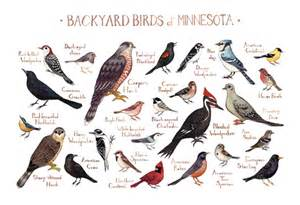 Most Common Backyard Birds - more backyard birds of the states the little nuthatch