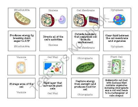 names and functions 19 best images about cells on pinterest mitosis biology and student