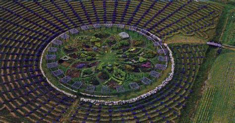 lavender maze giant lavender labyrinth in west michigan