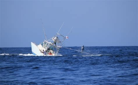 boat driving age boat sinks while fighting a marlin picture gallery