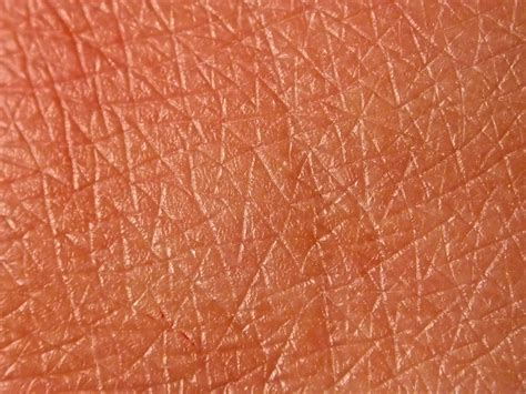 texture of human skin test 2 skin texture and pupil research and dev for creative practice