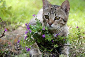 allontanare gatti dal giardino antifurto perimetrale archives antifurto casa
