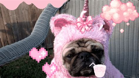 the pink pug pink pug gif find on giphy