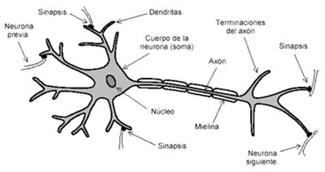 identificar imagenes sensoriales dibujos imagenes biologia sistema aparato dibujos de