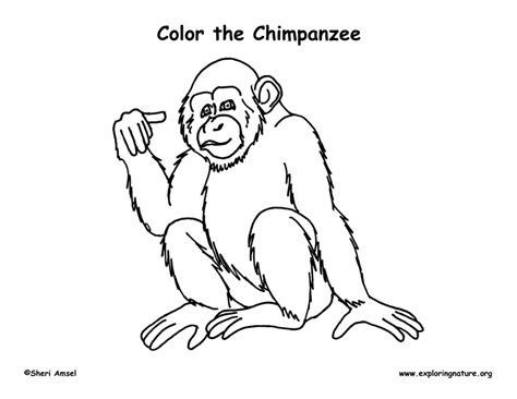 chimpanzee coloring nature
