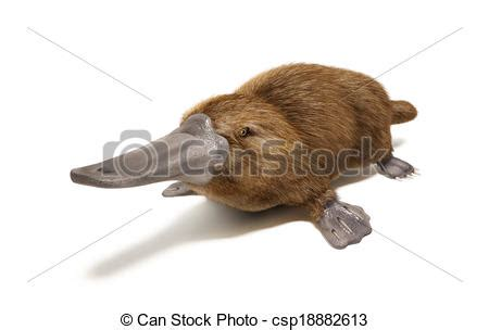 Silikon 3d Brown Line Duck platypus duck billed animal on white background with drop