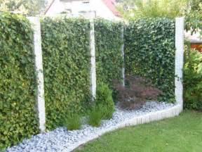 sichtschutz terrasse pflanzen 169 gpp helix pflanzen gmbh