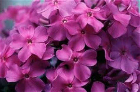 un fiore violetto violetto genziana deitranet