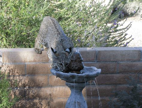 backyards for wildlife environmental writing university of arizona sweetwater