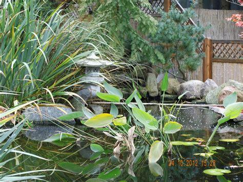wasserpflanzen f r teich 311 pflanzen f 252 r den teich gartenblog geniesser garten