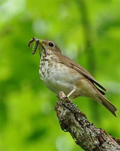 migration blessings the zen birdfeeder