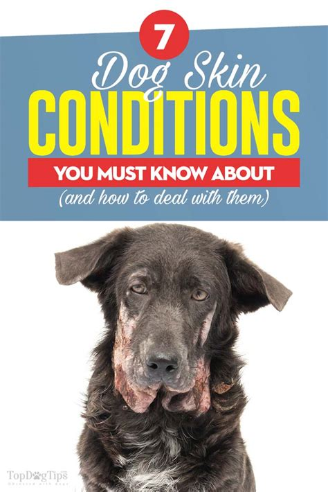 what to do for dogs skin 6 skin conditions and what to do about them couture country