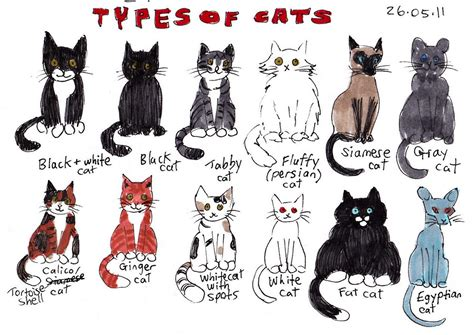 types of cats new breeds of cats cats types