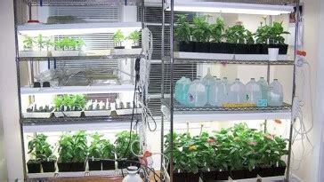 indoor vegetable garden low light how to grow vegetables indoors without sunlight