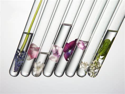 process flower essences  home