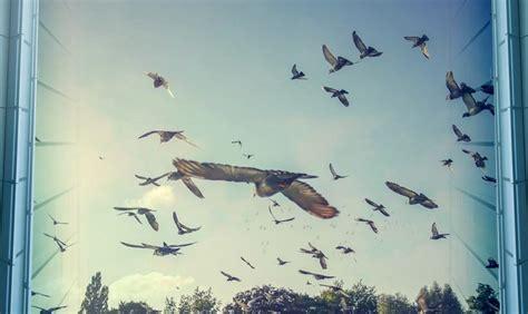 prevent bird strikes  solyx bird safety films