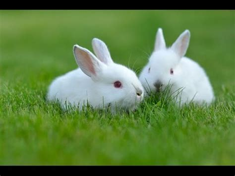 Animal World 5 top 5 cutest animals in the world
