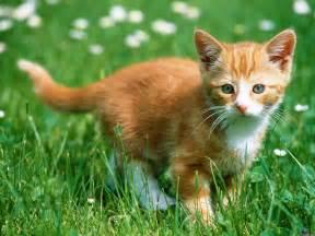 Fondos de Gato Feliz | Fondos de pantalla de Gato Feliz - Animales ... Gato