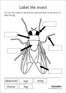 labeled diagram 3rd grade mfw k insect unit label the insect set worksheet mfw kindergarten insects