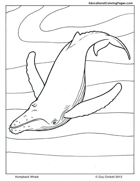 coloring page humpback whale orca coloring animal coloring pages for
