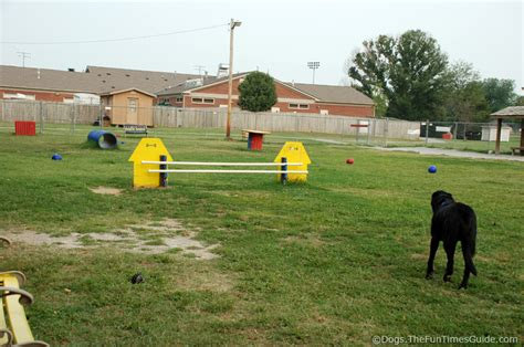 how to build a dog park in your backyard the franklin dog park vs warner dog park the franklin